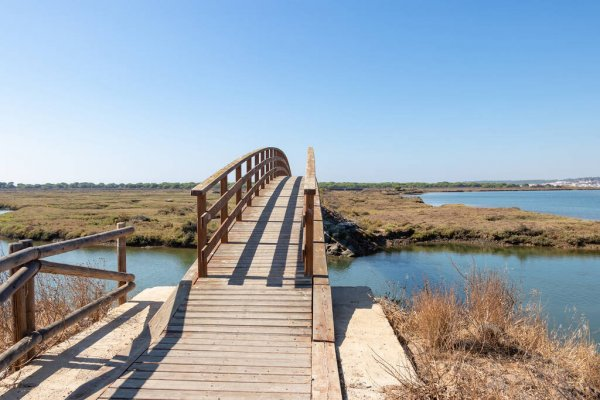 depositphotos_420817654-stock-photo-elevated-wooden-boardwalk-above-the
